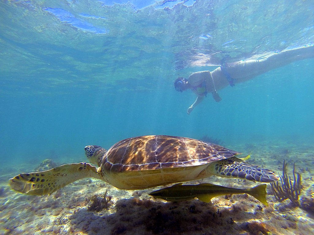 Turtle bay Resort Shuttle
