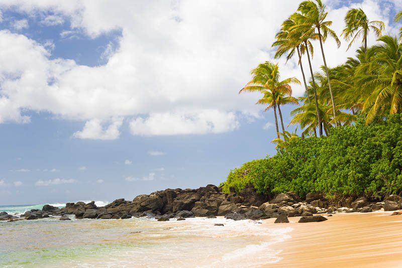 Turtle Bay Airport Shuttle