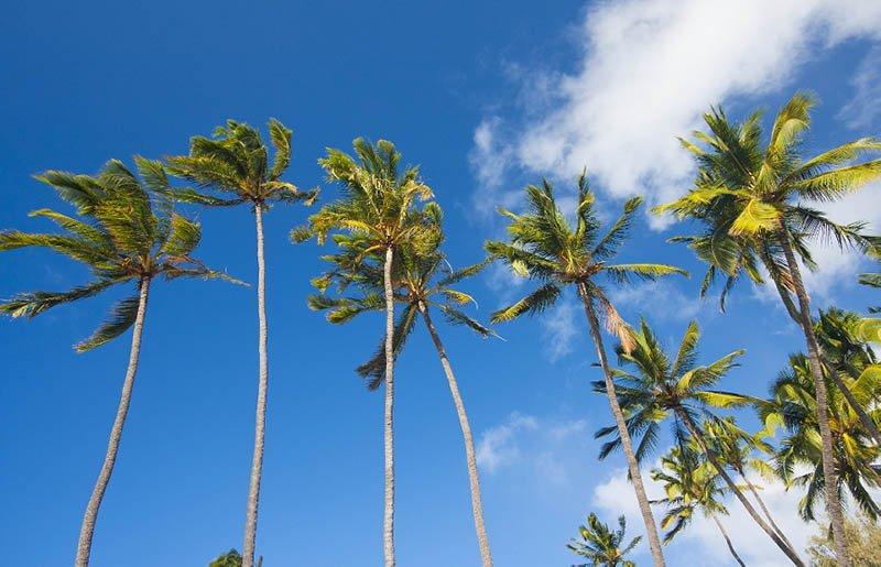 Book the Best Hawaii Shuttle Service