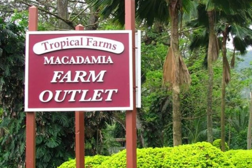 macadamia tropical farm tour