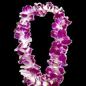Honolulu Airport Flower Lei Greeting