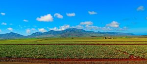 Dole Plantation Private Tour Oahu