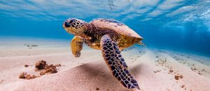 Turtle Tour Oahu